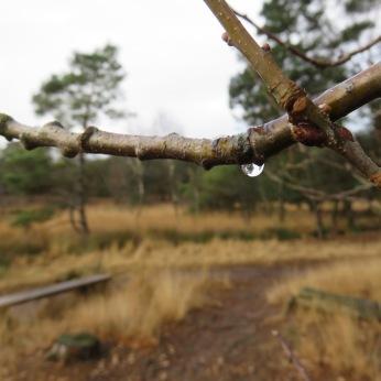 Hoe mooi één regendruppel kan zijn