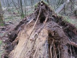 Natuurgeweld ..., bomen geveld.Foto Pl@ntster