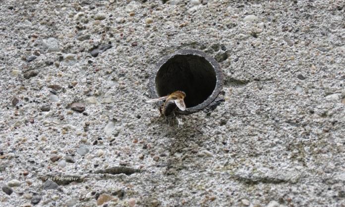 Insect kwam een kijkje nemen in de kazemat.Groet Pl@ntster