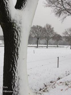 Prachtig winterplaatje