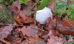 Geen grijze muis maar een tennisbal