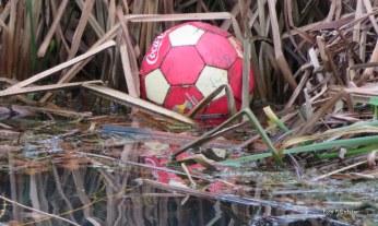 Een bal gelegen in het riet, waar hij lag je zag hem bijna niet