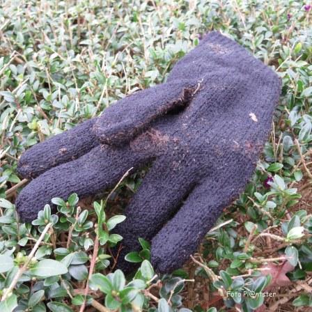 Iemand heeft nu maar een handschoen
