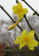 Al bloeiend ..., als vroeg