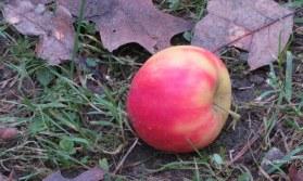 Deze appel is ver van de boom gevallen