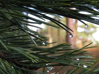 Bomen gevallen met regendruppels in getallen
