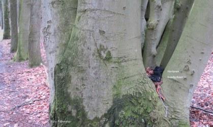 Hoe groot is een boom geleken,toevallig naar die handschoen gekeken.Als klein...,van wie zou deze handschoen zijn?