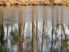 In lengte van bomen een ijslaagje en wazigheid in wintertijd.