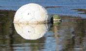 Een grote en een kleine bal zijn aan elkaar overgeleverd