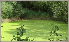 Het water ..., zo groen als gras... realiseerde ik