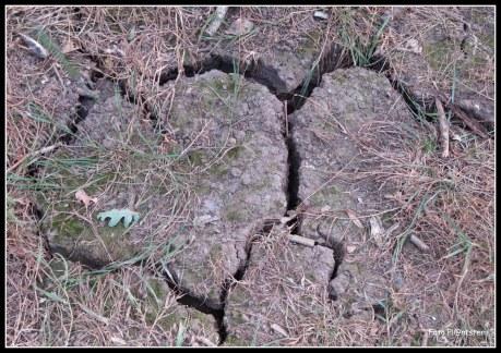 Grond gebarsten...,druppel water die de emmer deed overlopen of juist geen enkele waterdruppel