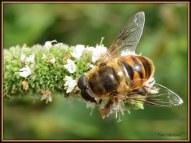 Met bijen gezoem van de een naar de andere bloem