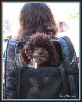 Een hond lijkt vaak op het baasje of vrouwtje