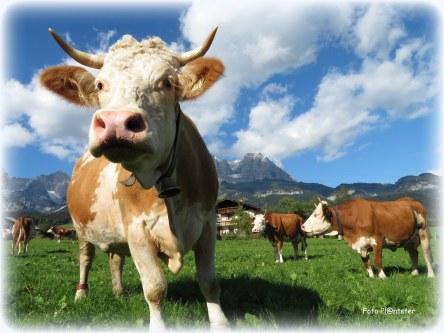 Hoe ziet een klein kind de koe?