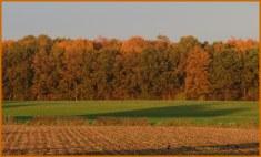 Vooruitzicht ..., een uitzicht op de herfst..., het geeft mij warme kleur