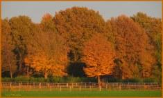 Prachtige herfstgloed....,toegelicht in het zachte avondlicht