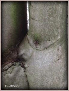 Foto omgedraaid ...,op de kop .., is de boom kus verbeelding vertekend tot afbeelding