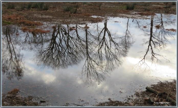 In 'n bijna droogstaande vennetje... bomen weerspiegelend