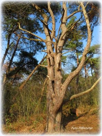 Een boom ...,hoe je het ziet of hoe je er tegenaan kijkt.Het is wat je erin ziet of waar het op lijkt