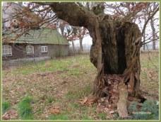 Vanaf de straat nietsvermoedend ...,ook deze boom onderhevig met gedateerde verval.Heel bijzonder moment dat ik erbij mocht uitlopen.... WOW!