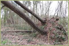 De wind raasde en tierde... het op bomen botvierde
