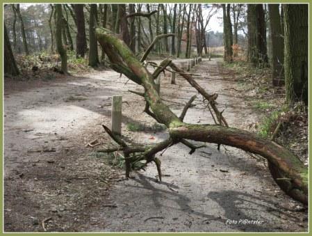 Fietspad gebarricadeerd door 'n tak die helaas met de flinke storm van gisteren het begeven heeft..., het loodje erbij neergelegd