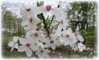 Met de bloei ... de lente in aantocht
