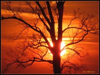 Hier zie je de zakkende zon.Om haar felle avondlicht te vermijden ben ik dus achter 'n boom gaan staan voor dit effect :D