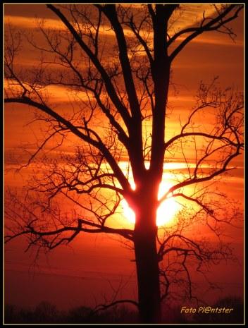 Genietend probeerde ik een foto van de zonsondergang te maken..., eigenlijk was de zon te fel maar achter een boom kreeg ik dit silhouet.Mooi hé?