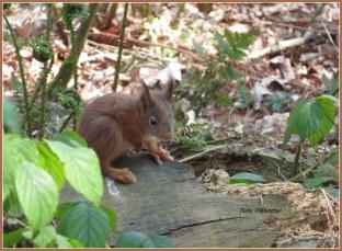 Tussen het struikgewas... een klein eekhoorntje ..., als bijzonder moment