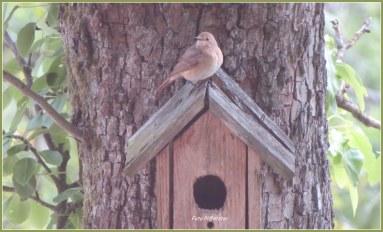 Vanaf binnen achter het raam op afstand is de foto gemaakt ...om te kunnen achterhalen wat dit voor vogeltje is
