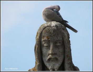 Het aanzien was een vredig ogenblik....de duif poetste zich op.