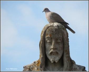 Niet op je kop laten zitten telde hier niet Deze duif zat op het hoofd van dit standbeeld in het ochtendzonnetje en mocht even zijn/haar rust erop vinden