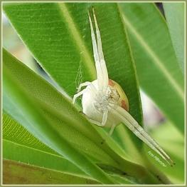 Wat kroop er met zijn poten languit en aftastend tussen het groengewas?Ik bemerkte alras dat 't deze spin was.