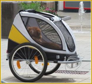 Een handig fietskarretje...,met de E Bike was het wel te doen aldus de eigenaar, waarmee ik in gesprek raakte.
