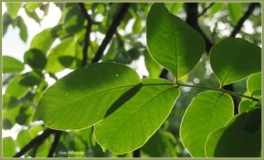 De boom in het groen. De zon schijnt erop. Ik sta er onder. Alles bij elkaar een wonder