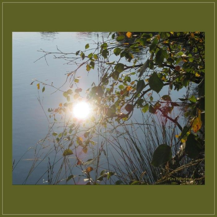 IMG_1255 Zonnelicht in donkere dagen