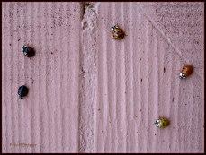 Hier zie je een kleine selectie lieveheersbeestjes