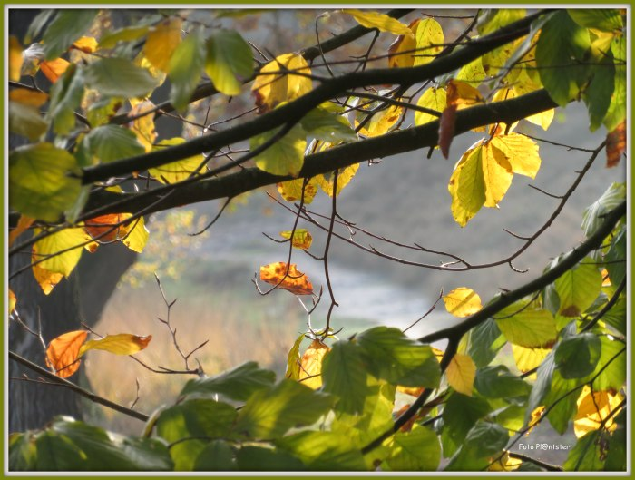 IMG_3307  Mooi stukje natuur.jpg