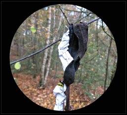 Bananenschil in een rottingsproces ,het doet oplossen in het zwart