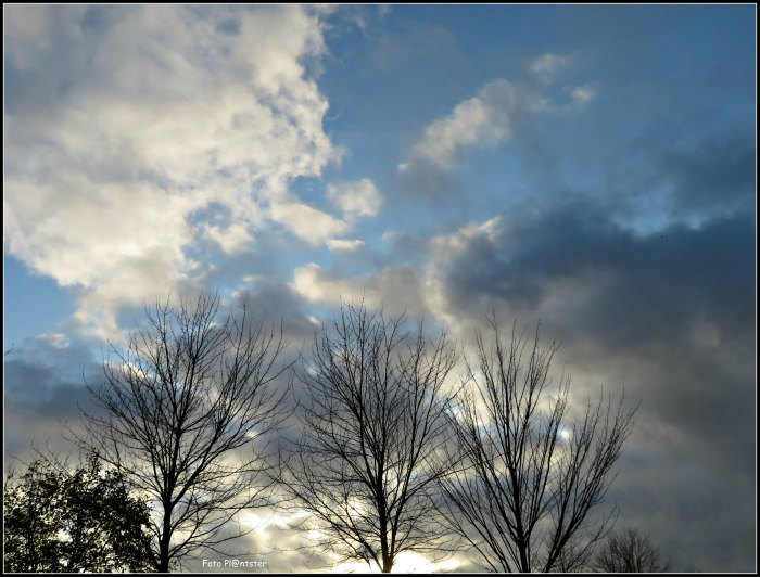 IMG_3905 Donker en licht