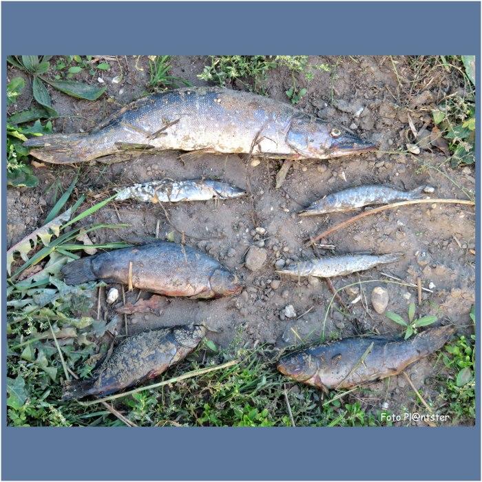 Vis op het droge