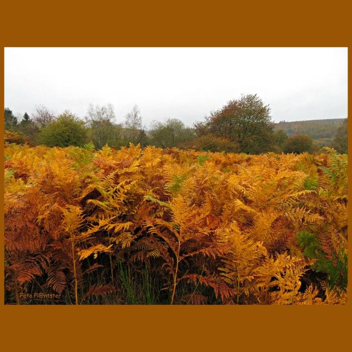 IMG_8668  Het bruin van herfstgetij.jpg
