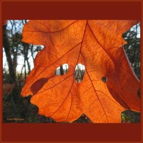 In warme herfstkleur