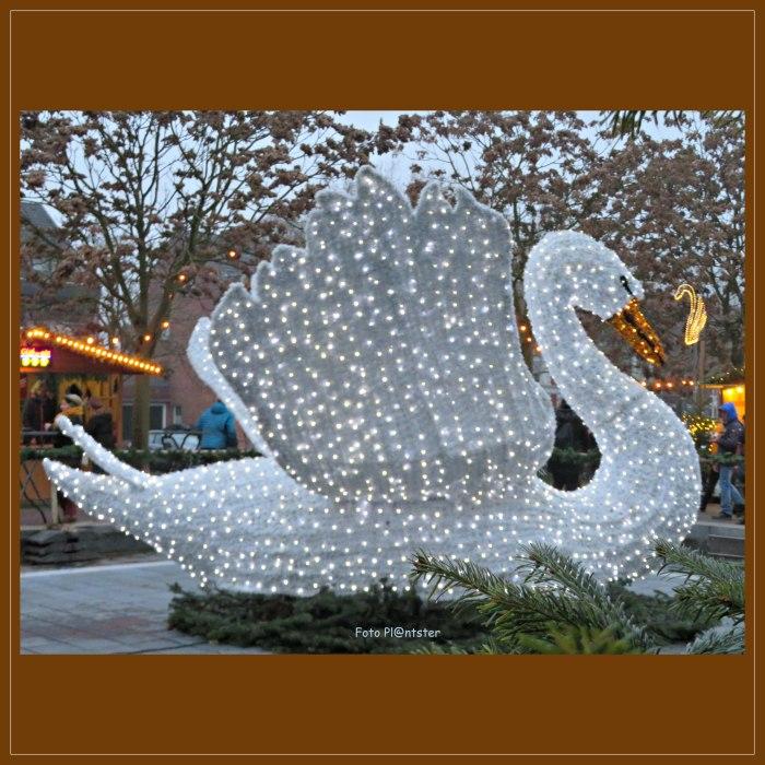 IMG_4688      Sierlijk als een zwaan.jpg