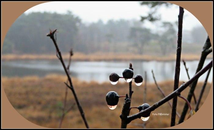 IMG_4770 Waterdruppels.jpg