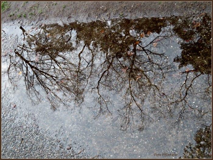 IMG_5126   Plas water.jpg