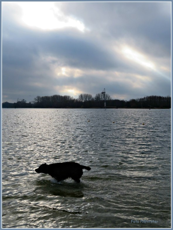 IMG_5139     Sihouet hond.jpg