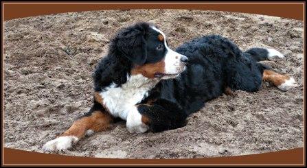 In zijn languit met een kijkje naar links vroeg hij zich af wat zijn die andere honden toch aan het doen.Het bijna van zijn gezicht af te lezen :D