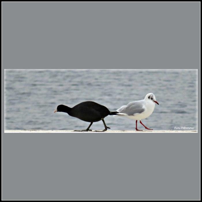 IMG_1639 Zwart wit